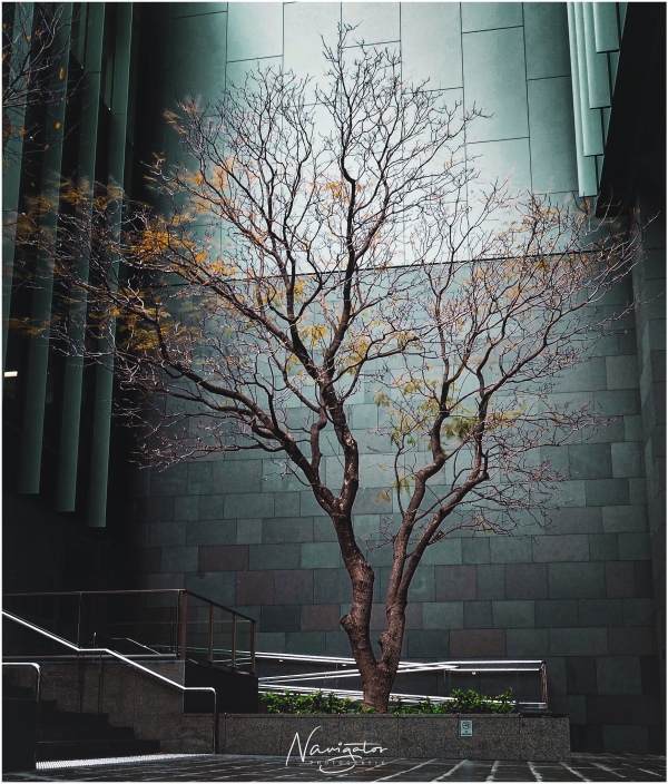 Nature and 'the built' entwined - courtyard, Perth